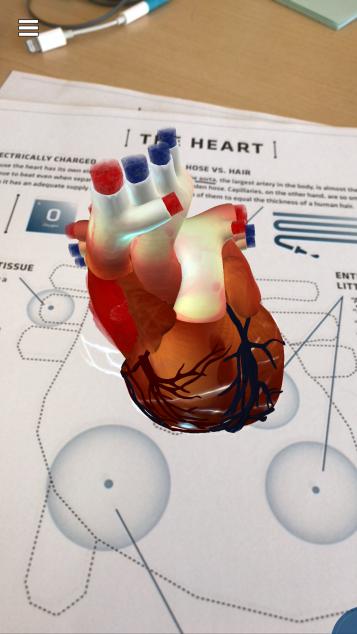 4D heart